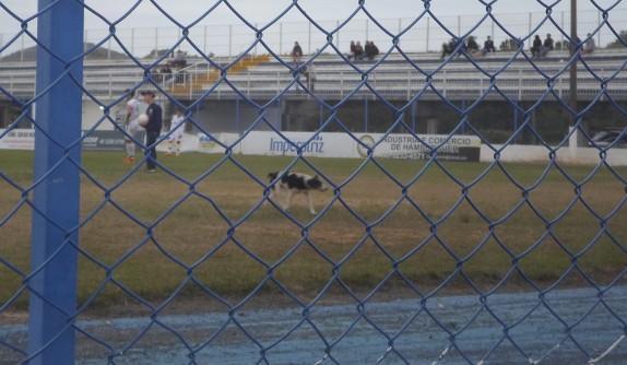 Cachorrinho se dirigindo ao portão de saída do gramado. (Foto: Amanda Joenck)