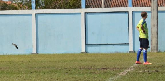 Tradicionais nos gramados gaúchos, os quero-queros davam seus rasantes mortais durante toda a partida. (Foto: Lucas Gabriel Cardoso)